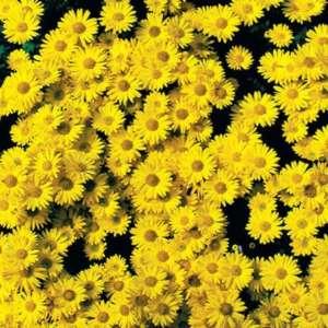 cascade lumineuse jaune