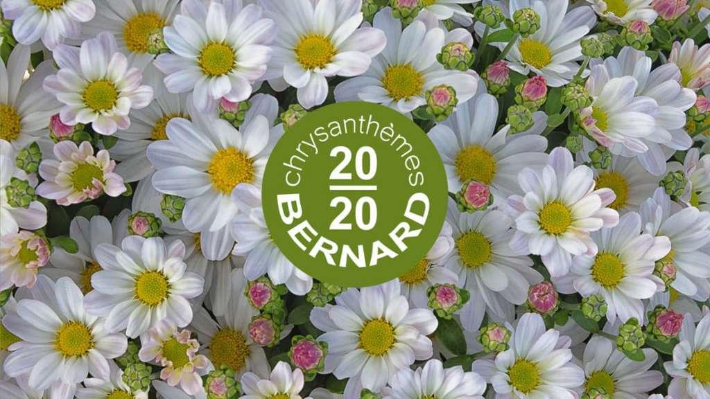Nouveau catalogue 2020 Chrysanthèmes Bernard