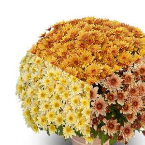 Petites fleurs compositions
